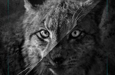 INYOURFACE (ESP) – Wildlife, 2018